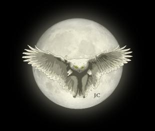 Night Owl by Jeremy Corff